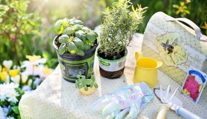 Why Growing Your Own Herb Garden Is Easier Than You Think