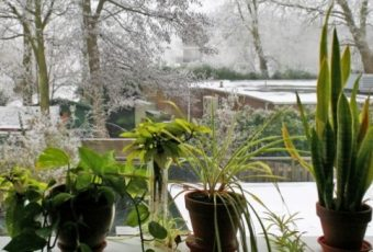 How To Help Your Plants Live This Winter