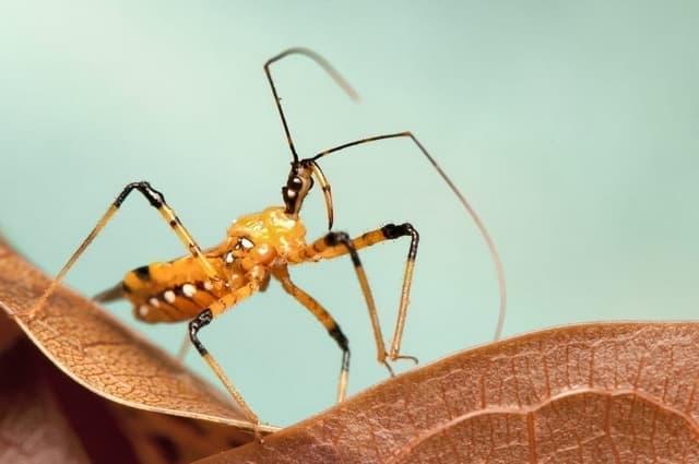 Les Insectes Tueurs Redoutes